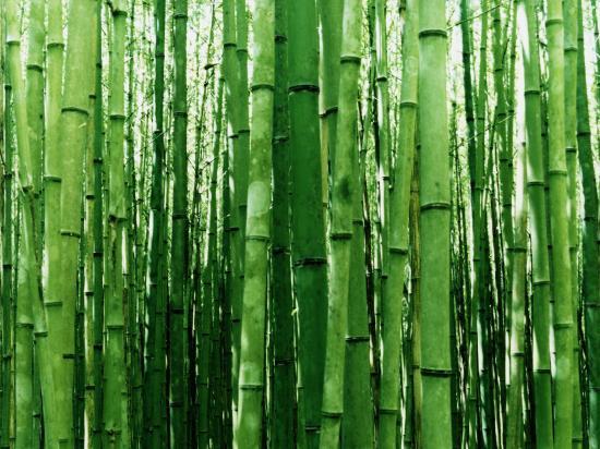 prendre soin du bambou dans son jardin tout sur le mobilier de jardin. Black Bedroom Furniture Sets. Home Design Ideas